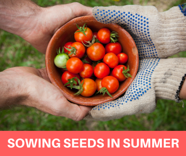 sowing seeds in summer